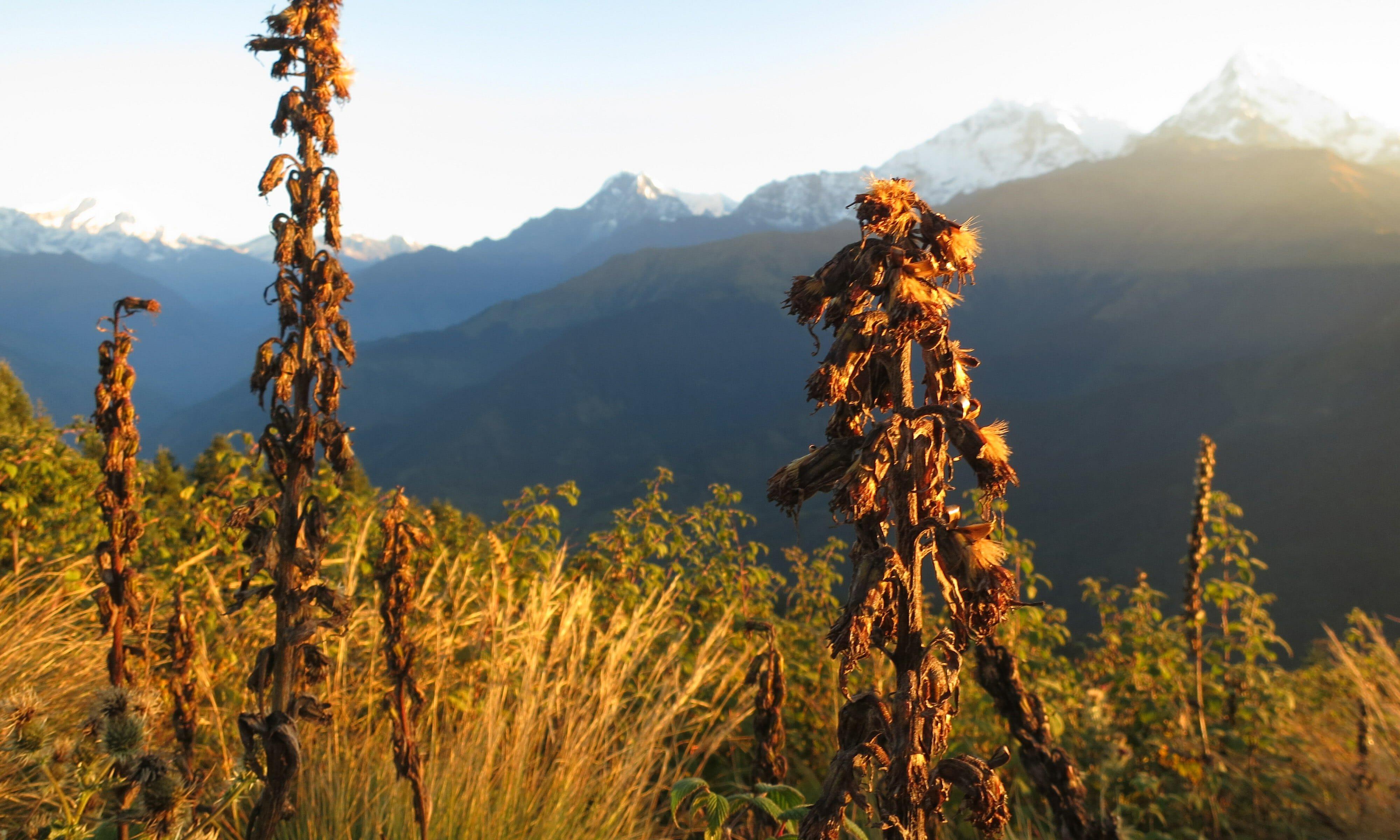 CHECT Photo - Nepal